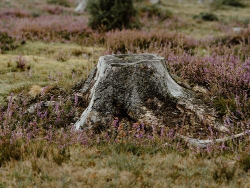 Arborists Ringwood