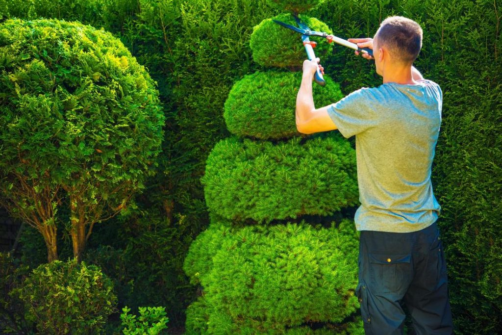 Hedge trimming melbourne eastern suburbs