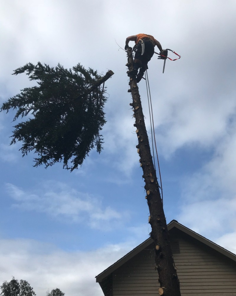 Palm tree removal ringwod