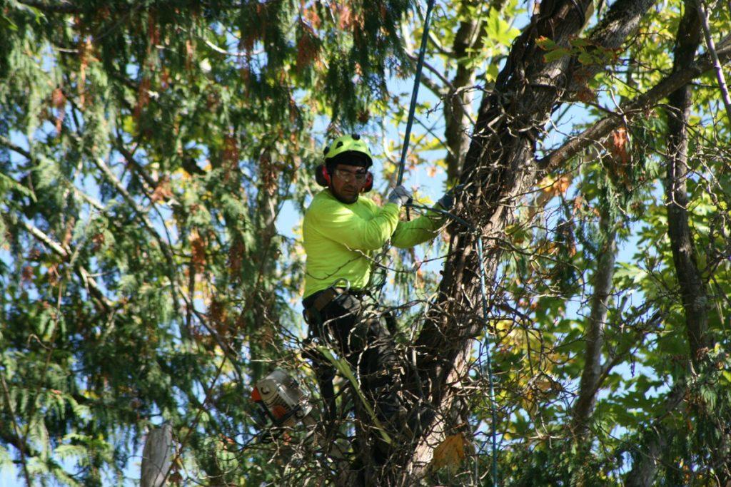 Tree arborist ringwood