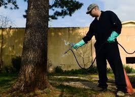 Tree care melbourne eastern suburbs