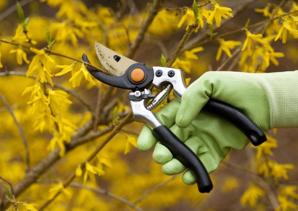 Tree care ringwood