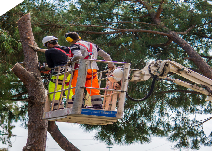 Tree cutting  ringwood