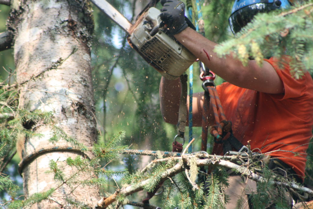 Tree loppers Melbourne
