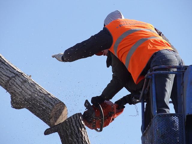 Tree loppers ringwood