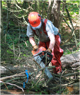 Tree removal Melbourne eastern suburbs