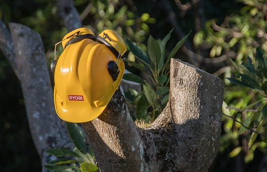 Tree surgeon melbourne