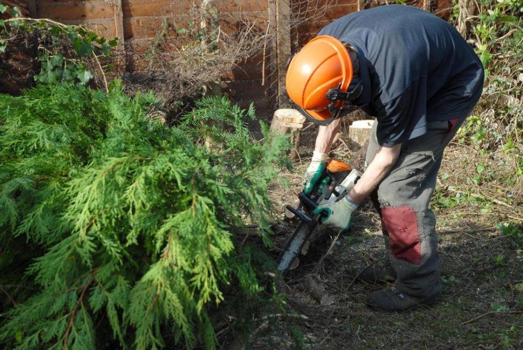 Tree trimming eastern suburbs